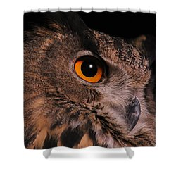 Eurasian Eagle-owl Shower Curtain by Judy Whitton