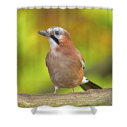 Eurasian Jay Shower Curtain