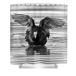 Eurasian Or Common Coot, Fulicula Atra, Duck Shower Curtain