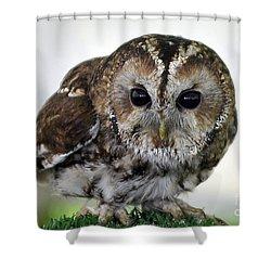 Eurasian Tawny Owl Shower Curtain