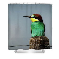 Shower Curtain featuring the photograph European Bee Eater by Wolfgang Vogt