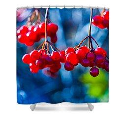 Shower Curtain featuring the photograph European Cranberry Berries by Alexander Senin