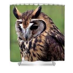 Eurasian Striped  Owl Shower Curtain by Stephen Melia