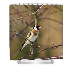 European Goldfinch 2 Shower Curtain by Jouko Lehto