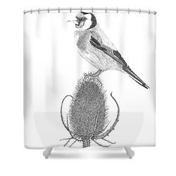 European Goldfinch Shower Curtain by Patricia Hiltz