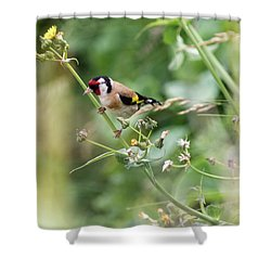 European Goldfinch Perched On Flower Stem B Shower Curtain