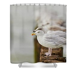 Shower Curtain featuring the photograph European Herring Gulls In A Row Fading In The Background by Nick Biemans