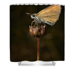 Shower Curtain featuring the photograph European Skipper by Jouko Lehto