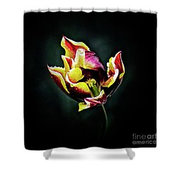 Evanescent Shower Curtain by Agnieszka Mlicka