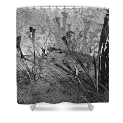 Shower Curtain featuring the photograph Even The Shadows Dance by Mary Sullivan