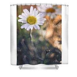Evening Daisy Shower Curtain
