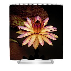Evening Glow Water Lily Shower Curtain by Julie Palencia