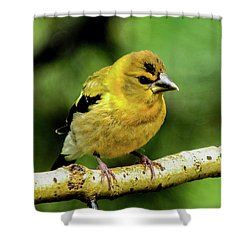 Evening Grosbeak Baby Shower Curtain