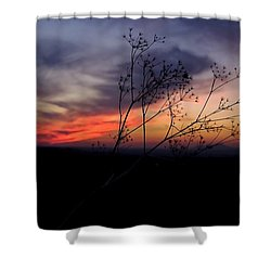 Evening Light Over Meadow Shower Curtain