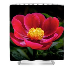 Shower Curtain featuring the photograph Evening Peony by Charles Harden