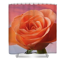 Shower Curtain featuring the photograph Evening Rose by Terence Davis