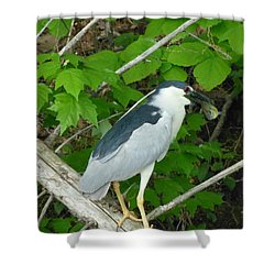 Evening Snack For A Night Heron Shower Curtain by Donald C Morgan