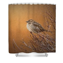 Evening Sparrow Song Shower Curtain