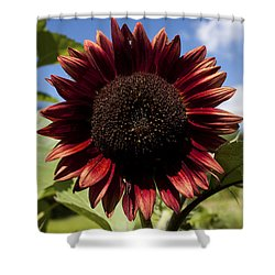 Evening Sun Sunflower #2 Shower Curtain