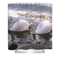 Evening Swans Shower Curtain