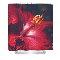 Shower Curtain featuring the photograph Evening Whispers by Sharon Mau
