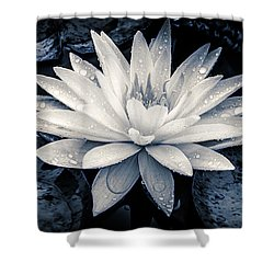 Evening White Water Lily Shower Curtain