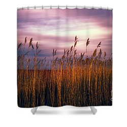 Evening's Candles Shower Curtain