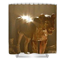 Evening's Light Shower Curtain