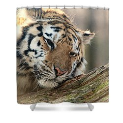 Ever So Gently Shower Curtain by Karol Livote