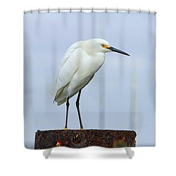 Ever Watchful Shower Curtain
