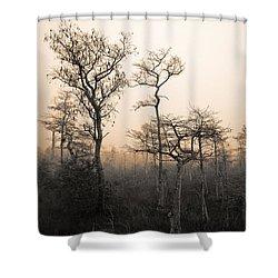 Everglades Cypress Stand Shower Curtain