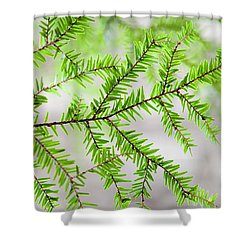 Shower Curtain featuring the photograph Evergreen Abstract by Christina Rollo