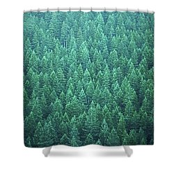 Evergreen Shower Curtain by Laurie Stewart