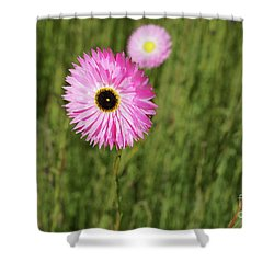 Everlasting  Shower Curtain by Cassandra Buckley