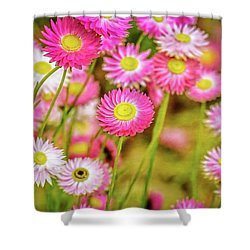 Everlasting Daisies, Kings Park Shower Curtain