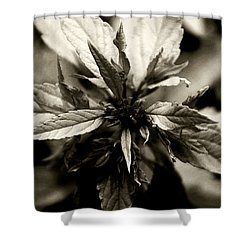 Evermore Shower Curtain by Linda Shafer