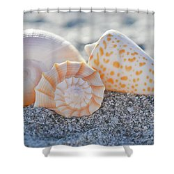 Shower Curtain featuring the photograph Every Shell Has A Story by Melanie Moraga