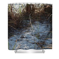 Shower Curtain featuring the photograph Everything Grows In The Sand by Robert Margetts