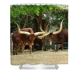 Everything Is Bigger In Texas Shower Curtain by Keith Stokes