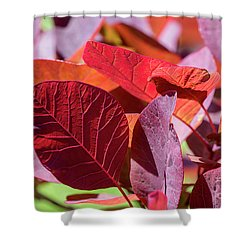 Shower Curtain featuring the photograph Everything Is Extraordinary by Linda Lees
