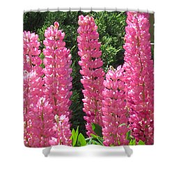 Everything Pink Shower Curtain by Jeanette Oberholtzer