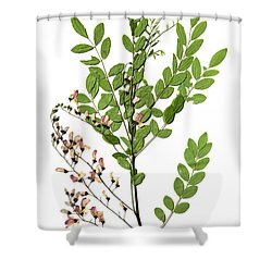 Eve's Necklace Shower Curtain