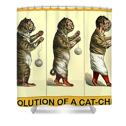 Evolution Of A Cat-cher Shower Curtain