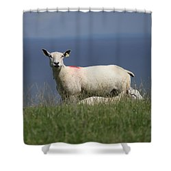 Ewe Guarding Lamb Shower Curtain