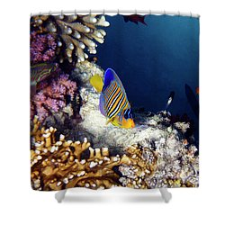 Exciting Red Sea World Shower Curtain