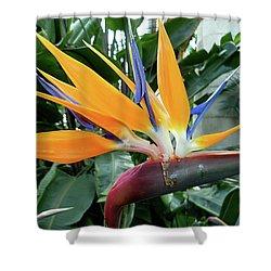 Exotic Bird Of Paradise Shower Curtain