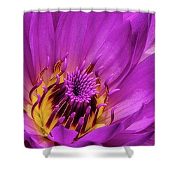 Exotic Hot Pink Water Lily Macro Shower Curtain by Julie Palencia