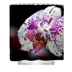 Shower Curtain featuring the photograph Exotica by Silke Brubaker