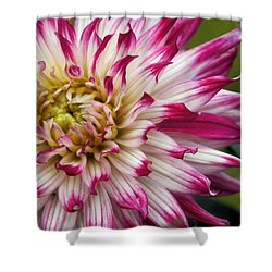 Exotique Shower Curtain by Patricia Strand