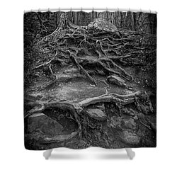 Shower Curtain featuring the photograph Exposed Roots by Alan Raasch